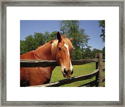 Framed Print featuring the photograph Virginia Lady by Don Struke