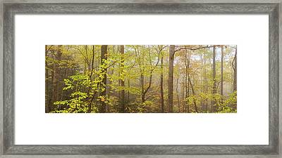 Virginia Woods Framed Print by Christian Heeb