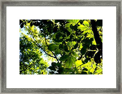 Viridians Framed Print by Mindy Newman