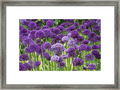 Visions In Purple Framed Print by Tim Gainey