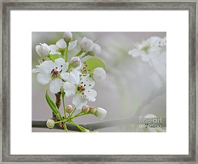 Visions Of White Framed Print