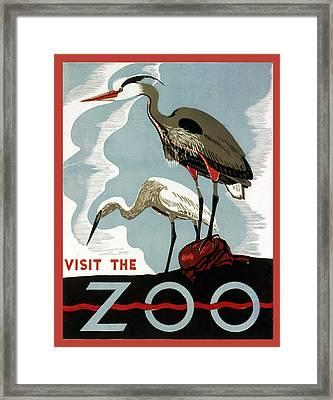 Visit The Zoo Egrets  Framed Print