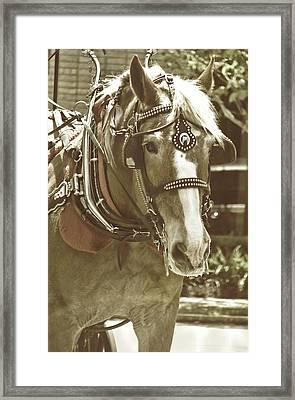 Visiting Savannah  Framed Print by Dressage Design