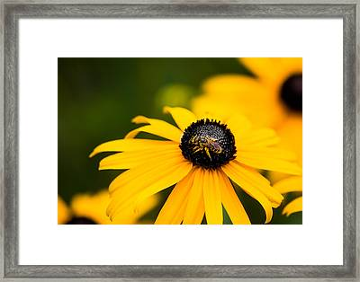 Visitor In The Garden Framed Print by Shelby  Young