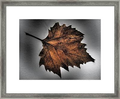 Vital Framed Print by Tom Druin