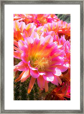Viva Las Flores Framed Print by Veronika Countryman