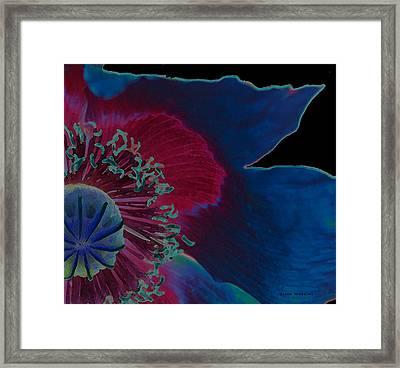 Vivid Framed Print by Diana Gonzalez