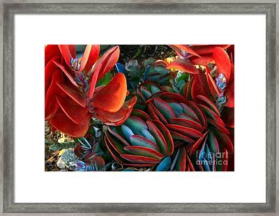 Vivid Paddle-leaf Succulent Framed Print