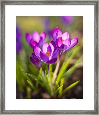 Vivid Petals Framed Print by Mike Reid
