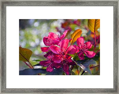 Vivid Pink Flowers Framed Print by Tina M Wenger