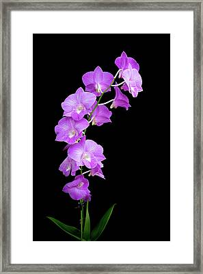 Vivid Purple Orchids Framed Print