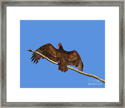 Framed Print featuring the photograph Vivid Vulture .png by Al Powell Photography USA