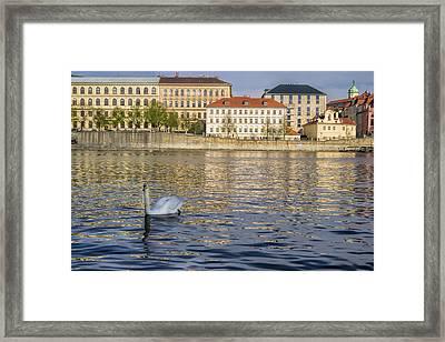 Vltava River In Prague Framed Print by Zita Stankova