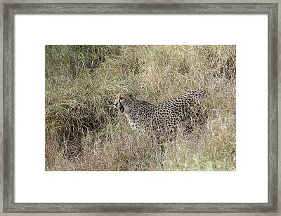 Framed Print featuring the photograph Vocalizing by Fraida Gutovich