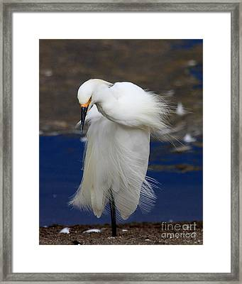 Vogue Framed Print by Wingsdomain Art and Photography