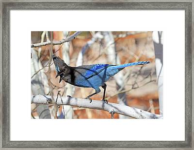 Voice Mail Framed Print by Donna Kennedy