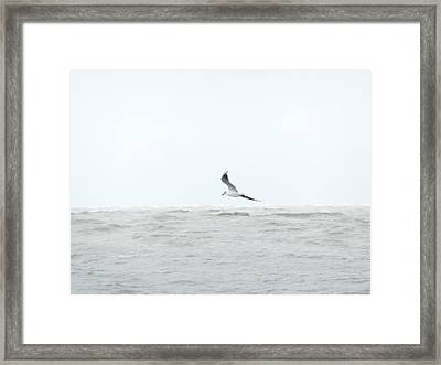 Framed Print featuring the photograph Vol Sur Mer Agitee by Marc Philippe Joly