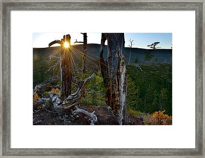 Volcanic And Forest Textures Framed Print by Leland D Howard