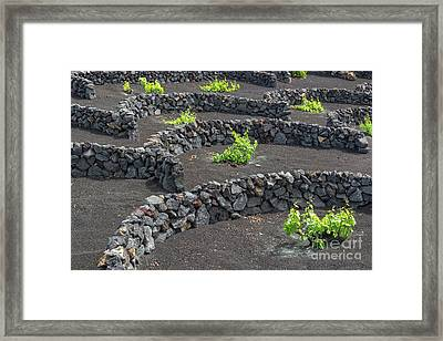 Volcanic Vineyards Framed Print by Delphimages Photo Creations