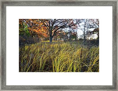 Framed Print featuring the photograph Volo Bog Fall Morning by Ray Mathis