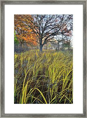 Framed Print featuring the photograph Volo Bog Natural Area by Ray Mathis
