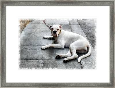 Volterra Italy Dog Framed Print by Edward Fielding