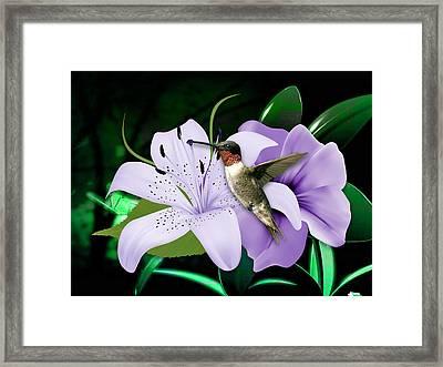 Voyage Hummingbird Framed Print