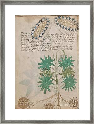 Voynich Flora 04 Framed Print
