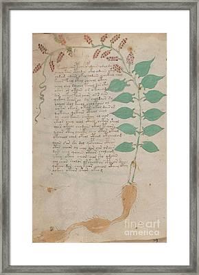 Voynich Flora 07 Framed Print