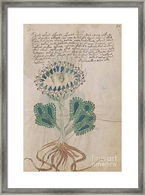 Voynich Flora 11 Framed Print