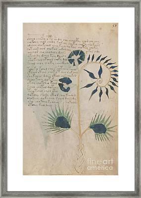 Voynich Flora 12 Framed Print