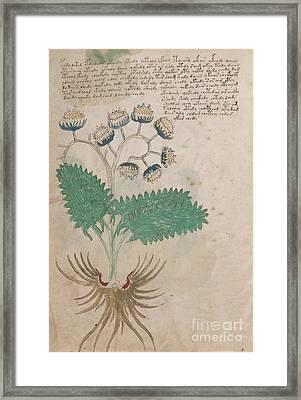 Voynich Flora 14 Framed Print