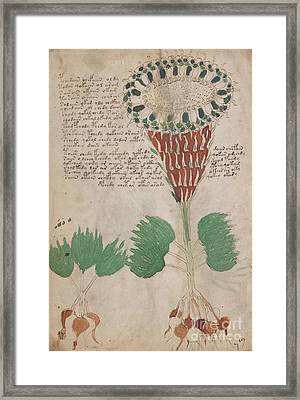 Voynich Flora 15 Framed Print