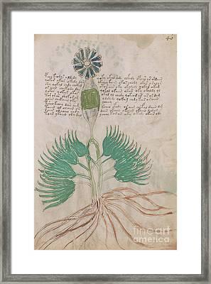 Voynich Flora 16 Framed Print