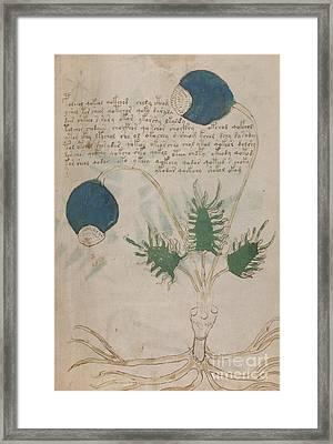 Voynich Flora 20 Framed Print
