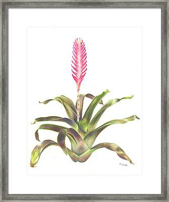 Vriesea 'purple Cockatoo' Framed Print by Penrith Goff