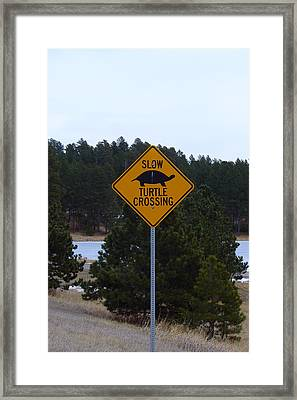 Vs Fast Turtle Crossing Framed Print