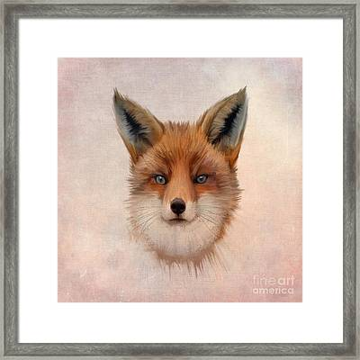 Vulpes Vulpes Framed Print by John Edwards
