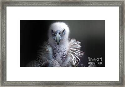 Framed Print featuring the photograph Vulture 2 by Christine Sponchia