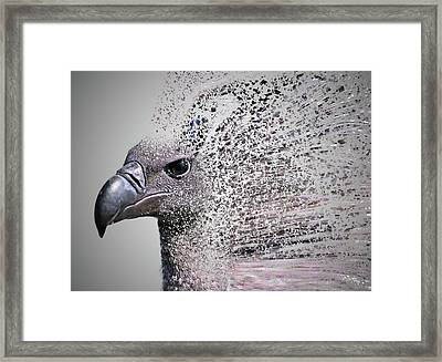 Vulture Break Up Framed Print