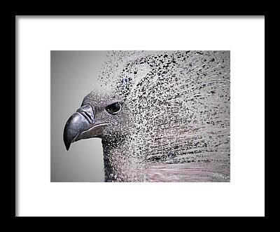 Accipitridae Framed Prints