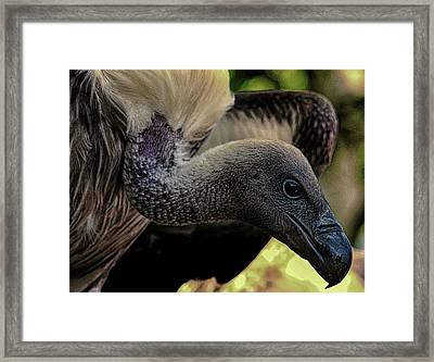 Vulture Framed Print by Martin Newman