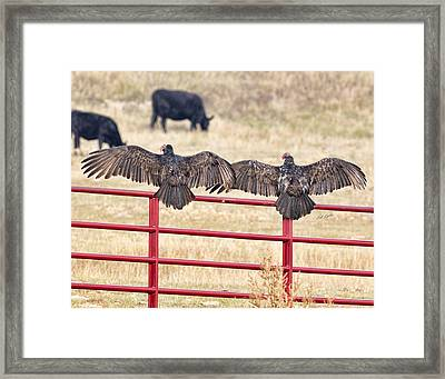 Framed Print featuring the photograph Vulture Overlap by Bill Kesler