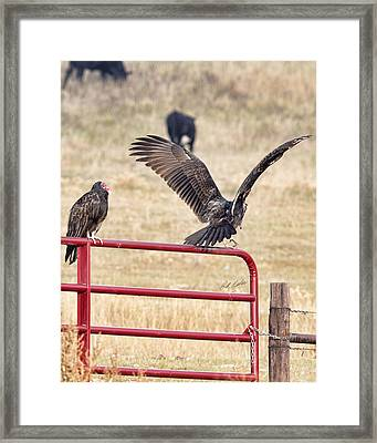 Framed Print featuring the photograph Vulture Vee by Bill Kesler