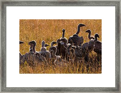 Vultures Framed Print by Paco Feria