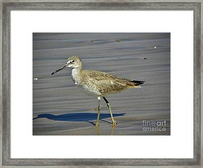 Wading Day Framed Print