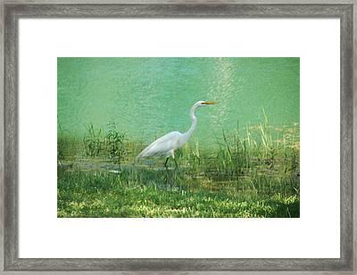 Wading Egret Framed Print by Kathleen Stephens