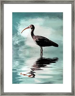 Wading Ibis Framed Print by Cyndy Doty