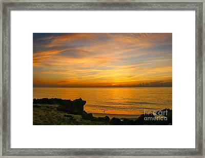 Wading In Golden Waters Framed Print