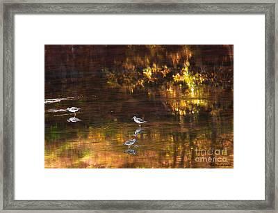 Wading In Light Framed Print